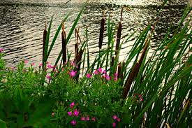 riverbanks botanical garden free images nature plant field lawn meadow leaf flower