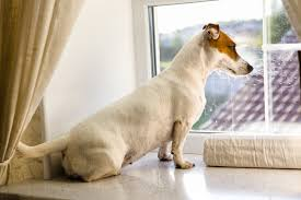 Dog Blinds Home Alone Hounds U2013 10 Ways To Keep Your Dog Busy When You U0027re Out