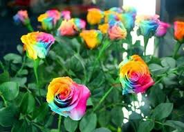 rainbow seeds blue store