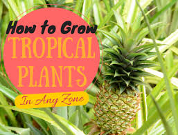 grow tropical plants zone