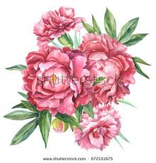 Peonies Bouquet Red Carnations Peonies Bouquet Flowers Botanical Stock