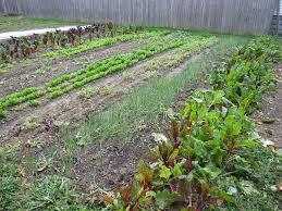 cover crop bay branch farm