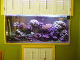 in wall aquarium designs custom in wall corner aquarium infinity