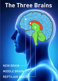 Image Of Brain Anatomy Best 25 The Human Brain Ideas Only On Pinterest Human Brain