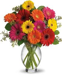 great gerberas farm fresh daisies san diego flower shop