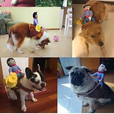 cute dog halloween costumes halloween cute pet dog cowboy funny soft puppy costume dog rider