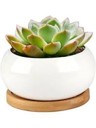 Ceramic Succulent Planter by Set Of 2 Square Succulent Planters Ceramic Herb Plant Fl Https