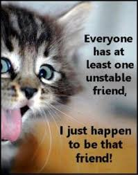 top 35 most funniest cat quotes funny cat quotes cat and animal