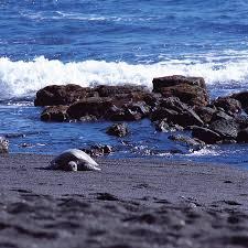 punaluu beach a big island black sand beauty go visit hawaii