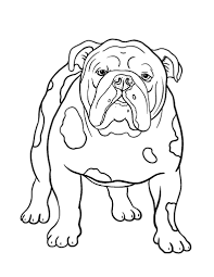 coloring pages for girls puppyes bull dogs printable fancy