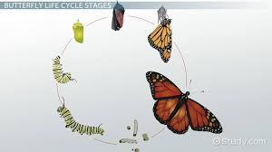 life cycle of a butterfly lesson for kids video u0026 lesson