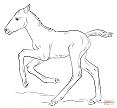 coloring mesmerizing foal coloring pages cute running