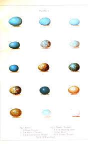 animal u2013 bird u2013 eggs new england 1 vintage printable at
