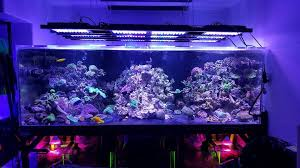 sb reef lights review r2r led lit tank thread page 3 reef2reef saltwater and reef