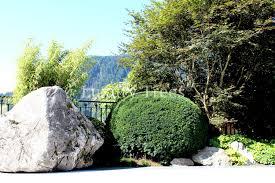 Gartengestaltung Mit Steinen Und Grsern Modern Sichtschutz Aus Pflanzen Für Garten U0026 Terrasse Luxurytrees