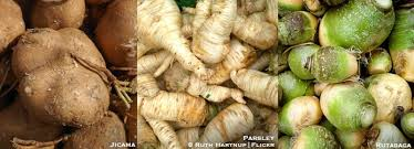 A List Of Root Vegetables - edible roots a list of 26 edible roots facts