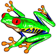 collection of 25 dart tree frog on