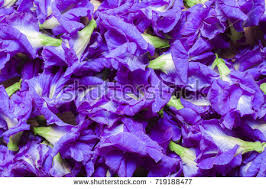 Flower Table L Butterfly Pea Flower On Table Asian Stock Photo 719188477