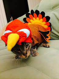 funny thanksgiving costumes your daily cute happy thanksgiving and cats in turkey costumes