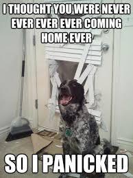 Hilarious Animal Memes - 20 hilarious animal memes