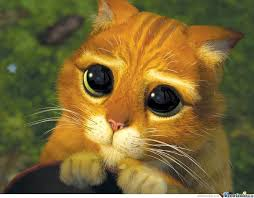 Sad Cat Meme - sad cat by sugarfreelemonz meme center