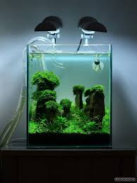 Aquascape Online 170 Best Aquascape Fishes And Equipment Images On Pinterest