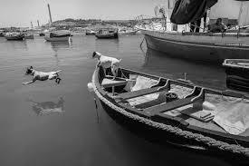 black white boat dog sea vintage wallpapers hd desktop and