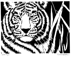 white tiger face to face