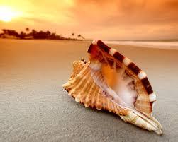 shell wallpaper hd 34309 1600x1280 px hdwallsource com