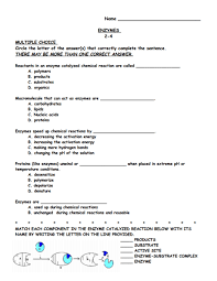 enzymes 9th 12th grade worksheet lesson planet