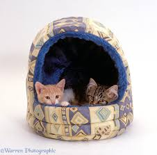 Kitten Bed Two Kittens In An Igloo Bed Photo Wp15633