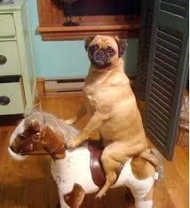 imágenes graciosas de locas 50 fotos de animales graciosas locas y divertidas