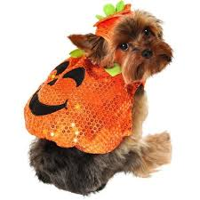 Yorkie Costumes Halloween 44 Imaginary Dressed Dog Images