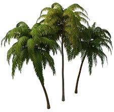 coconut tree png images transparent free download pngmart com