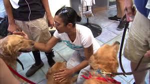 Comfort Golden Retriever Breeders Comfort Dogs Provide Hope Encouragement After Orlando Shooting