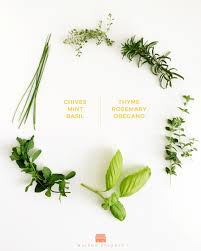Grow Herbs Indoors by 6 Beneficial Herbs To Grow Indoors This Fall