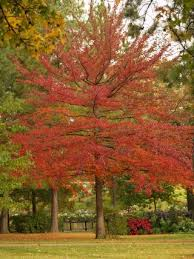 color your landscape every fall east gardening