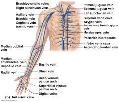 Heart External Anatomy Anatomy Of Thorax Gallery Learn Human Anatomy Image
