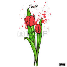 vector image color hand drawing tulip sketch flower on a
