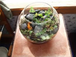 making a terrarium thriftyfun