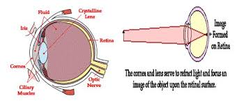 Surface Anatomy Eye The Anatomy Of The Eye Assignment Point