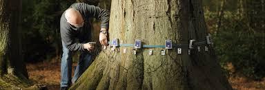 why tree surveys tree surveys