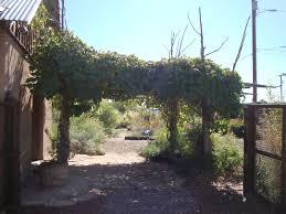 native plants albuquerque danger garden plants of the southwest a nursery visit