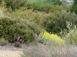 australian native garden plants australian plants society tasmania inc locations gardens