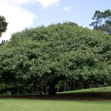 Botanic Gardens Brisbane City Brisbane Mt Coot Tha Botanic Gardens 82 Photos 24 Reviews