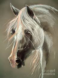 pastel drawings the grey horse soft pastel drawing horse art 1