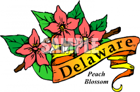 delaware state flower clipart picture of the deleware state plant