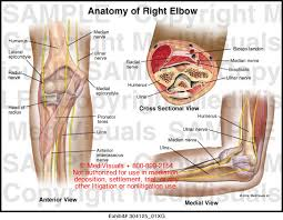 Anatomy Of Knee Injuries Human Anatomy Elbow And Arm Anatomy Fencing Elbow And Knee