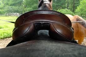 evaluating saddle fit gullet width u2013 equine ink