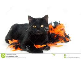 black cat with halloween decorations stock photo image 16548610